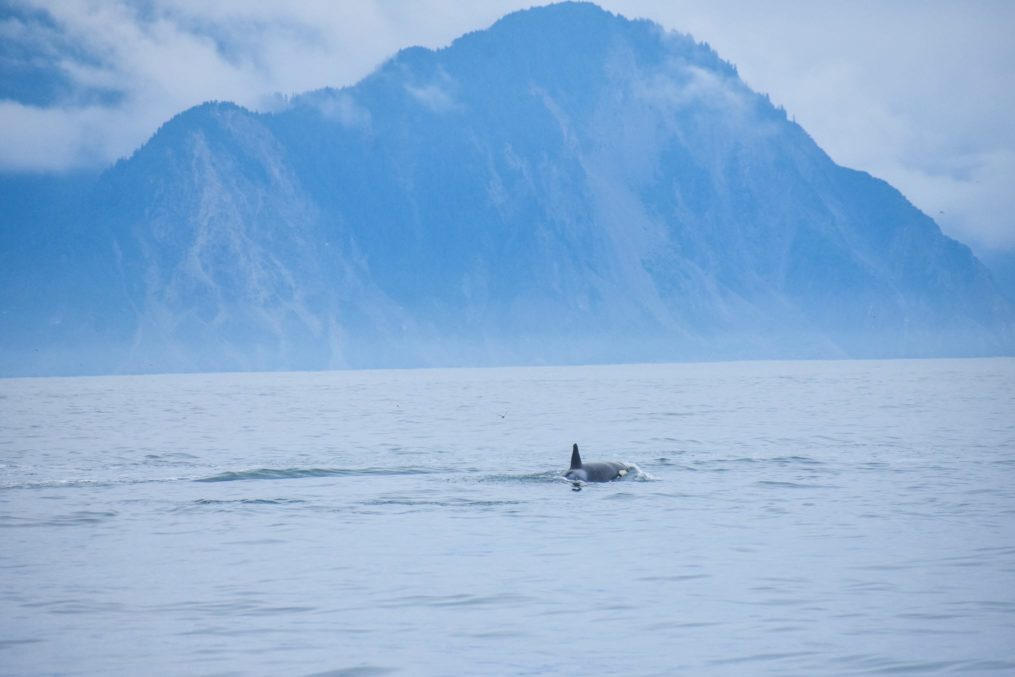 Whale watching on the Alaska Expedition
